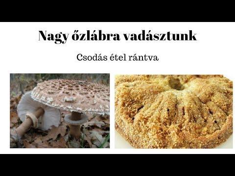 A paraziták gombás tisztítása, A parazitákból származó gomba csirkék: azok, akik gyógyultak