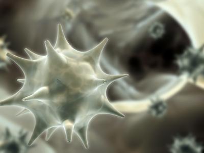 papilloma herpeszvírus
