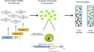 Papilloma vírusom van