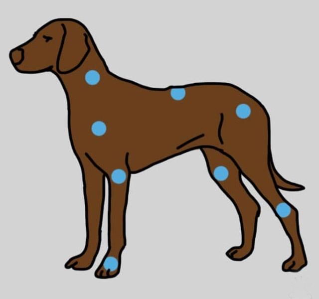Kutya száján szemölcs? - Kutyák - dombtetovendeghaz.hu