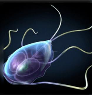 Paraziták jelenléte a szervezetben - Paraziták az emberi fej kezelésében