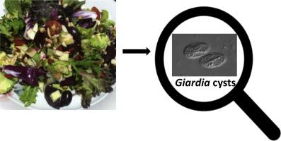 étrendi giardiasis menü