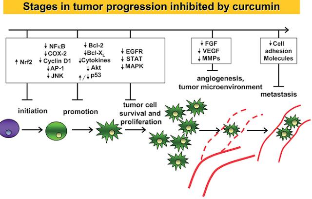 A rák genetikai áttekintése (PDQ®) -Health Professional verzió