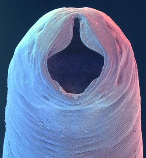 élőlény - Pöli Rejtvényfejtői Segédlete