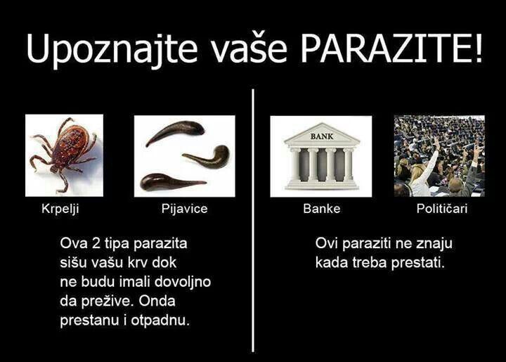 parazita maj