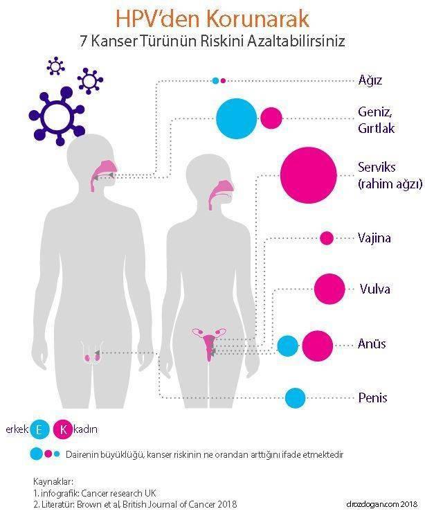 hpv humán papilloma vírus nedir