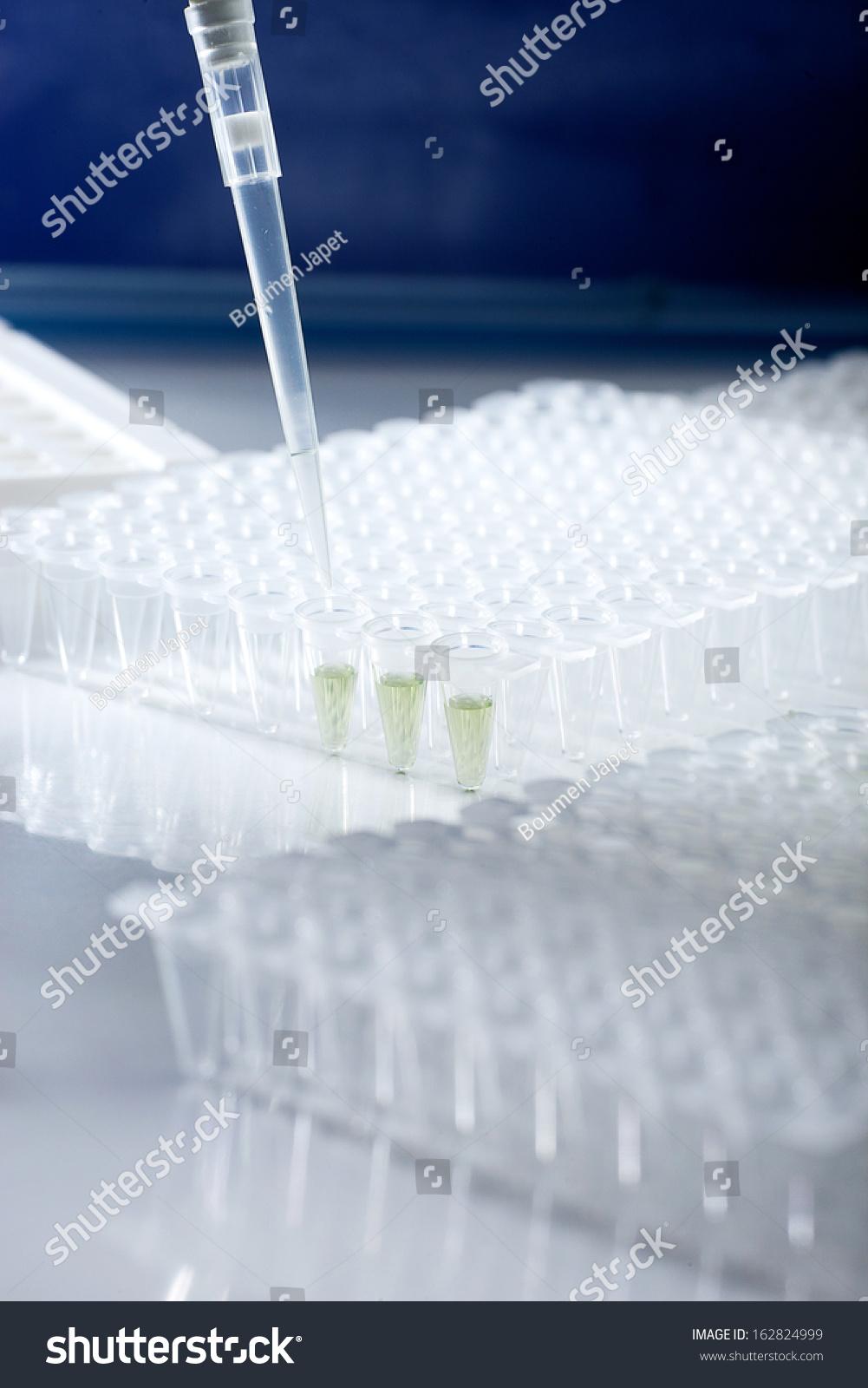 papillomavírus stádium