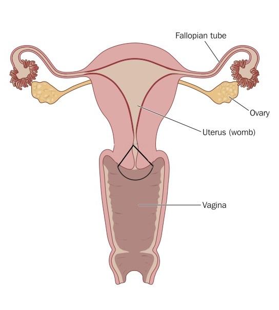 papillomavírus és schwangerschaft