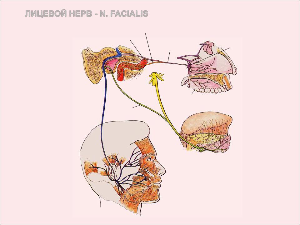 a nasopharynx és a sinusok parazitái menekülnek Lehetséges-e kiküszöbölni a terhes nők papillómáit?