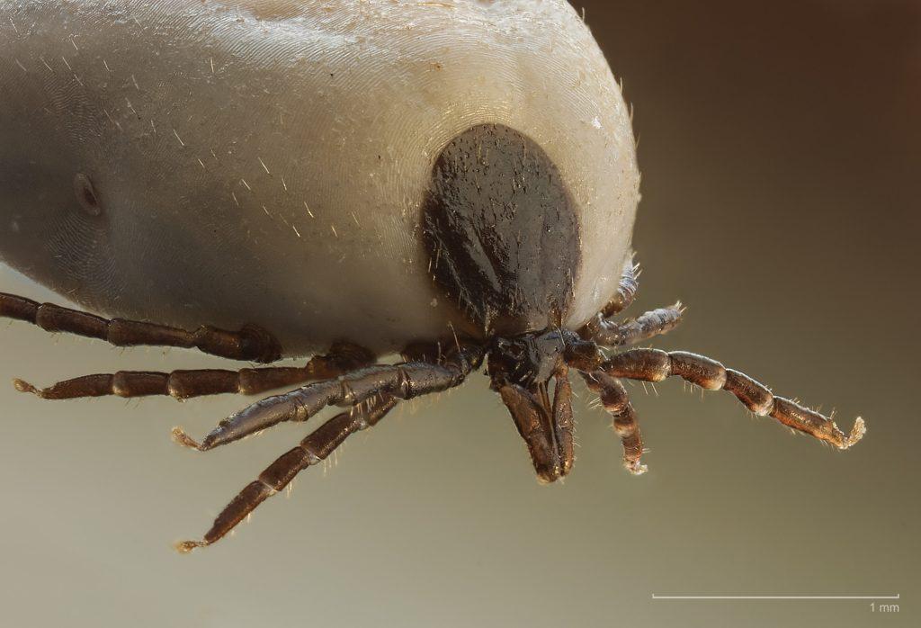 Belső és külső paraziták - Külső paraziták meghatározása