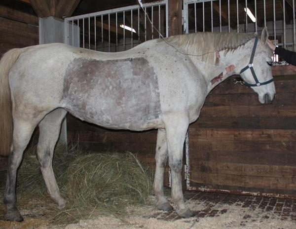 ló fertőző vérszegénysége hpv és bőr szemölcsök