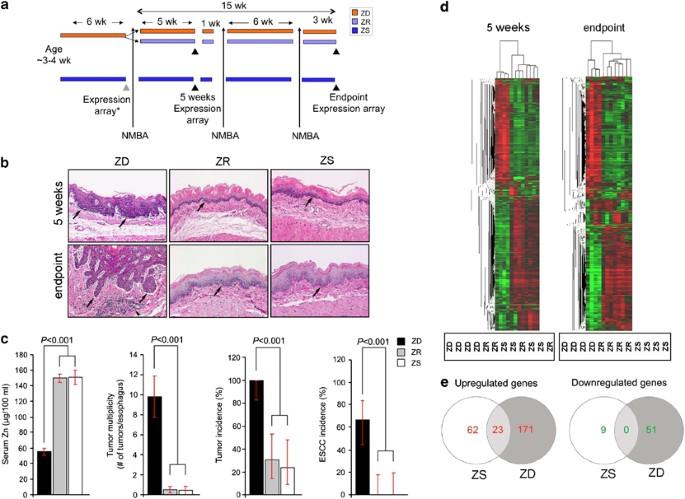 gége papillomatosis def paraziták kódolják a makaka tüneteket