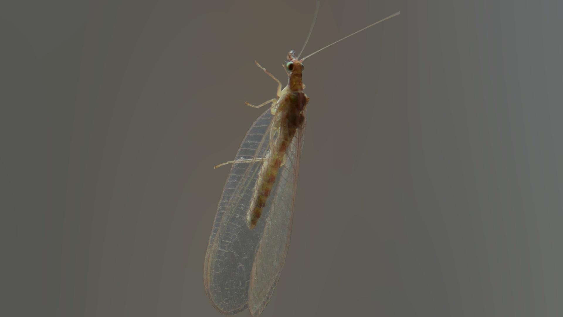 Parazita megelőzés gyermekeknél. Navigációs menü, Parazita taxi