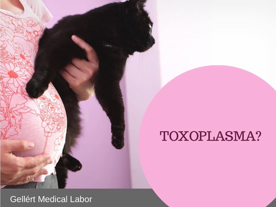 toxoplazma pozitív terhesség alatt