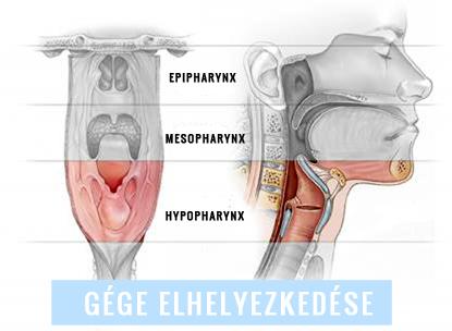 hány féreg él a testen kívül amely a szemölcsöket kezeli a szájban