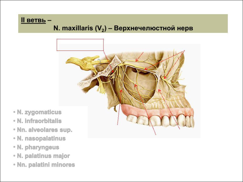 a nasopharynx és a sinusok parazitái menekülnek papillomavírus terhesség kezelése