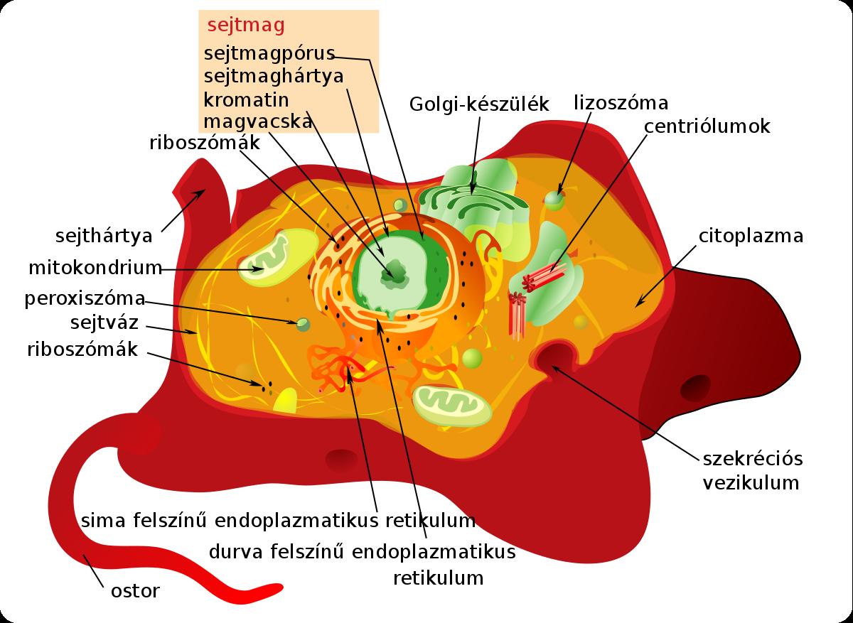 pinworms macskákban tünetek perineális szemölcsök nőknél