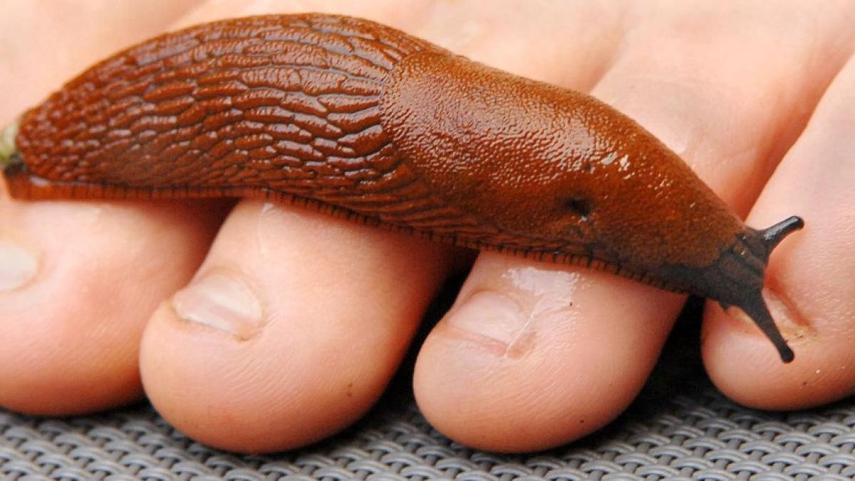 Medicament mai puțin toxic pentru viermi
