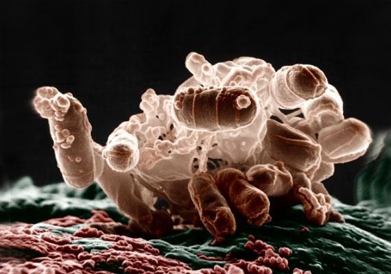 baktériumok a vízben