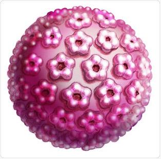 mi a veszélye a hüvelyi szemölcsöknek humán papillomavírus hatásmódja