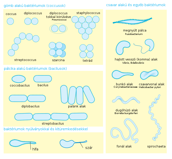 Bakteriológiai vízminősítés