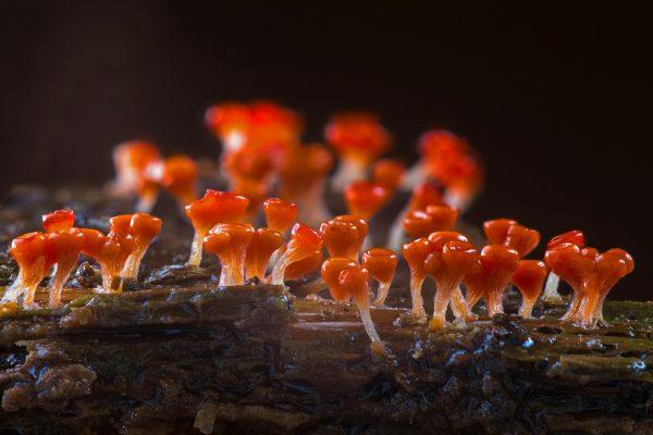 a gombák károsodása féreg emberrel