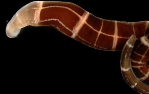 42 ezer éve fagyott férgeket keltettek életre