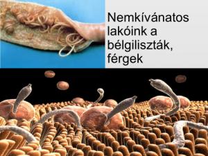 Parasitol gyógyszer férgek számára, Távol-keleti specialitások és a májrák - Utazók figyelmébe