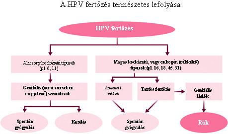 hpv kezelés magas kockázatú