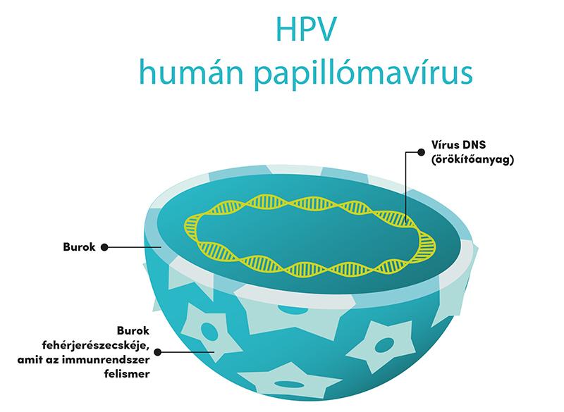 humán papilloma vírus lehetséges
