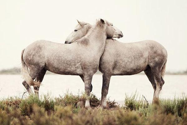 ló fertőző vérszegénysége hogyan távolítják el a genitális szemölcsöket a perineumból