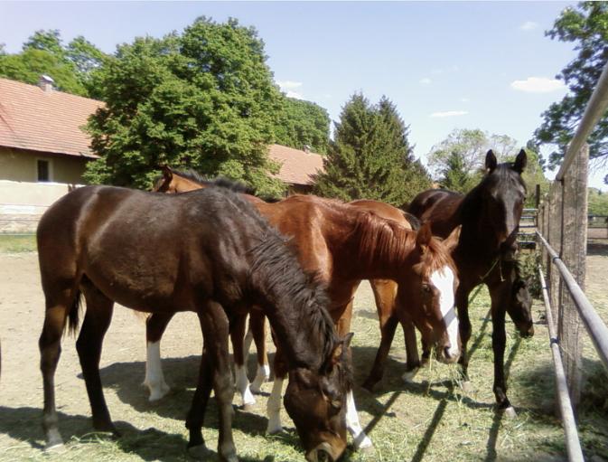ló fertőző vérszegénysége nemi szemölcsök veszélye