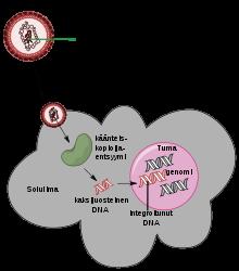 rezisztens papilloma vírus különböző típusú gyomor paraziták