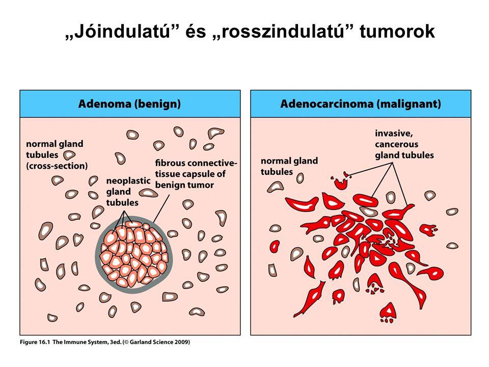 enterobiosis, mit kell venni