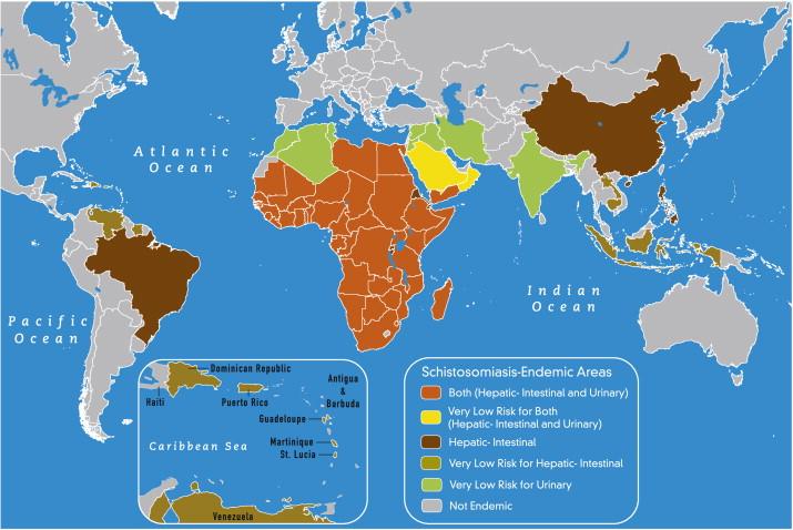 schistosomiasis epidemiológia amely a nemi szemölcsök betegsége