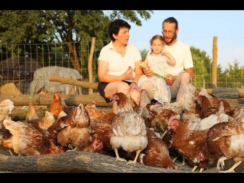 Csirkék helminthiasis tünetei és kezelése. Tojótyúkok kezelése férgektől