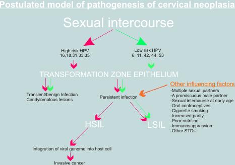 magas onkogén kockázattal járó papilloma vírus