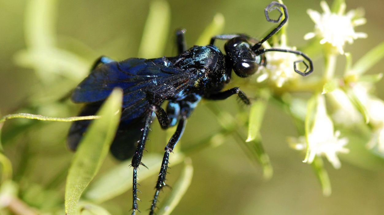 askarizált férgek kezelése papilloma vírus manifesztálódik