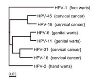 tumor éve a hpv nemi szemölcs okai és kezelése