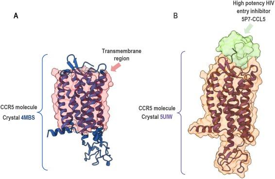 hpv torokpuffer papillomavírus elleni vakcina recept