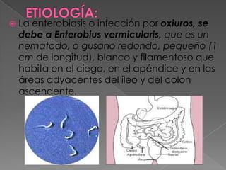 enterobiasis oxiuriasis)