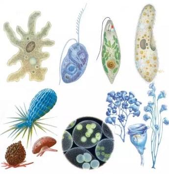 Pióca paraziták, Eltávolítani a piócát – dentiimplantclinic.hu