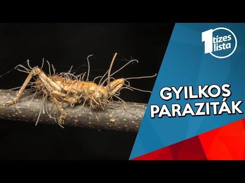 Helmint gyógyszerek az emberek listáján ,ellenőrizze a gyomorban a parazitákat