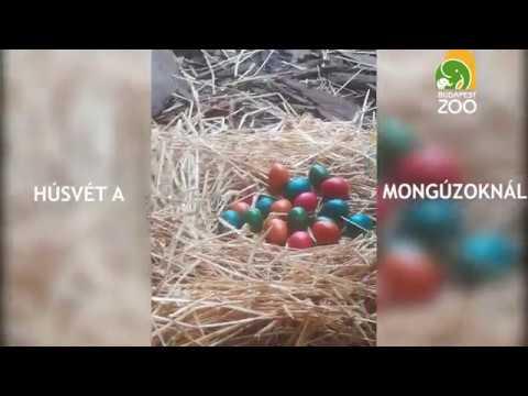 férgek és tojások elleni gyógyszerek