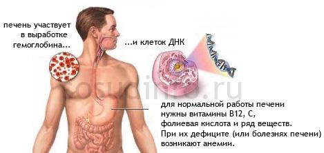 gyógyszer anthelmintikus opistorhiasis