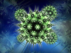 papilloma vakcina vírus hím vélemények