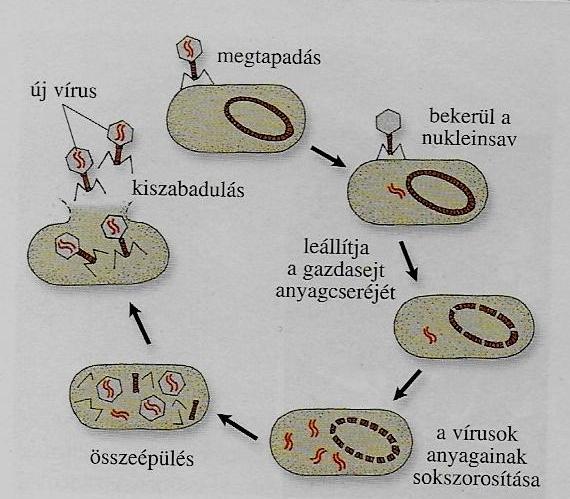 vírusfertőzés | Bethesda Gyermekkórház